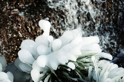 在冰oeolo瀑布冬天厚实的层数的草  免版税库存图片