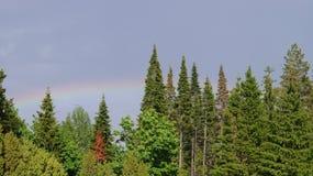 在冷杉上面的彩虹  库存照片