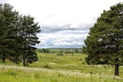 在冷杉之间的风景领域 免版税库存照片