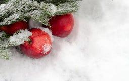 在冷杉木下的苹果 库存照片