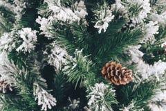 在冷杉木分支的美丽的雪  库存图片