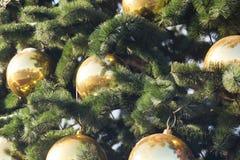 在冷杉木的球形 免版税图库摄影