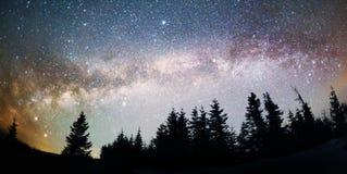 在冷杉木的银河 库存图片