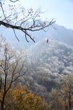 在冷气候的落的叶子 免版税图库摄影