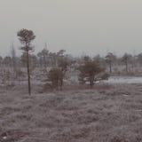 在冷淡的冬天沼泽-年迈的照片的斯诺伊风景 免版税库存图片