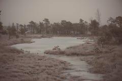 在冷淡的冬天沼泽-年迈的照片的斯诺伊风景 图库摄影