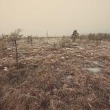 在冷淡的冬天沼泽-年迈的照片的斯诺伊风景 免版税库存照片
