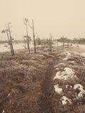 在冷淡的冬天沼泽-年迈的照片的斯诺伊风景 库存图片