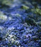 在冷淡的早晨草的太阳射线 库存照片