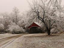 在冷淡的树中的红色被遮盖的桥 库存图片