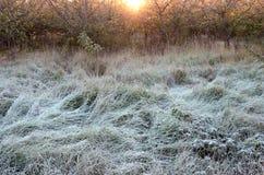 在冷淡的草草甸的日出 库存图片