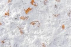 在冷淡的雪背景的几片褐色叶子在森林里 库存图片