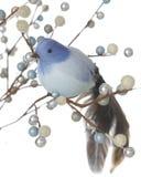 在冷漠的莓果中的蓝色鸟 库存图片