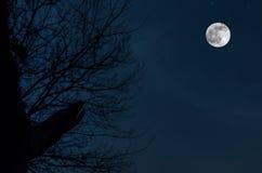 在冷的口气,光秃的树枝的剪影的夜神奇风景喜欢狼人反对在夜空的满月 免版税库存图片