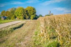 在冷的麦地附近的农村路 免版税库存照片