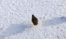在冻池塘的鸭子在多雪的公园 免版税库存照片