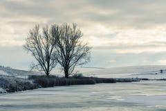在冻湖岸的两棵树在冬天环境美化, Slova 库存照片