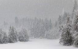 在冻湖的冬天在森林,暴风雪使森林几乎unvisible 免版税库存照片