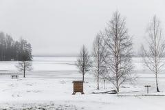 在冻湖边的树在冬天 免版税库存图片
