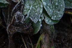 在冻结的绿色的图画霜 库存图片