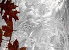在冻结的背景的摘要叶子 图库摄影
