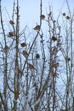 在冻结结构树的麻雀 库存照片