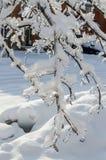 在冻雨以后 库存照片