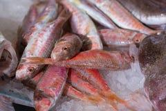 在准备好的冰的梭鱼烹调 免版税库存照片