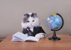 在准备好的服装的猫地理教训  免版税图库摄影