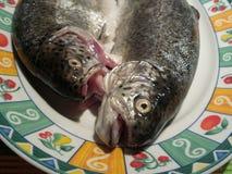 在准备好的板材的未加工的鳟鱼烹调 免版税库存照片