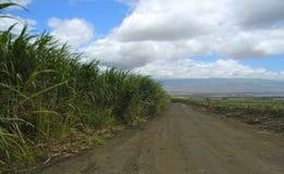 在准备好砍和已经生长甘蔗之间的路 免版税库存图片