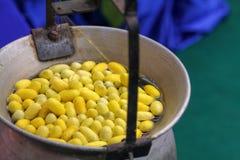 在准备螺纹丝绸的罐的煮沸的桑蚕茧 免版税库存照片