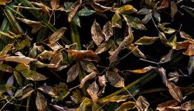 在凉快的黑水的下落的叶子 背景 免版税库存图片