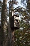 在凋枯的树干的老鸟舍 库存图片