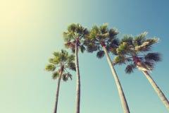 在减速火箭的样式的棕榈树 库存图片