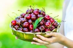 在减速火箭的碗的新鲜的樱桃 拿着在她的手上一碗新近地被采摘的甜水多的樱桃的女孩 库存照片