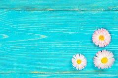 在减速火箭的绿松石木桌上的雏菊 库存图片