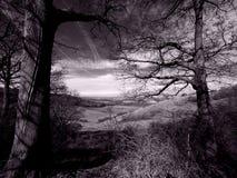 在减速火箭的黑白照片的乡下风景 免版税库存图片