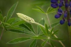 在凶猛开花的一条绿色毛虫 库存照片