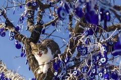 在凶眼树cappadocia的一张逗人喜爱的猫开头嘴 免版税库存图片
