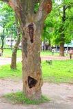 在凹陷的巨大的树干 大树根和光束在一个一棵大树绿色forestSpring的草甸根与新绿色事假 库存照片