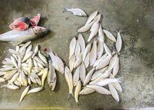 在出售的鱼在市场 库存照片