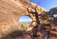 在分开曲拱的走的杜松树 库存照片