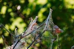 在分支上的一个蜘蛛网 免版税库存图片