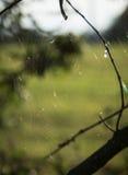 在分支上的蜘蛛网 免版税库存图片
