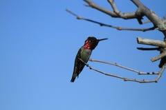 在分支栖息的鸟 库存图片