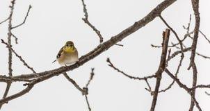 在分支的一只小鸟 免版税库存图片