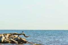 在分支的三只鸟在海 库存图片