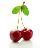 在分支的两个樱桃莓果与叶子特写镜头 免版税库存照片