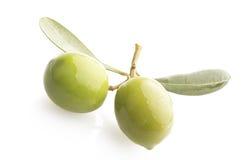 在分支的两颗绿橄榄 库存图片